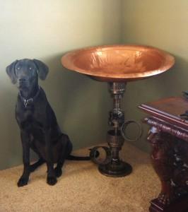Michelle.s Table w. Dane Puppy