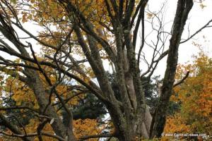 fall trees 2JPG